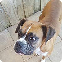 Adopt A Pet :: Beatrice - Gadsden, AL