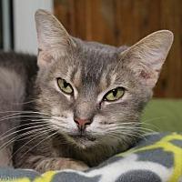 Adopt A Pet :: Kristen - Columbus, OH