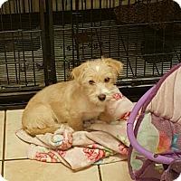 Adopt A Pet :: Jorge - Los Angeles, CA