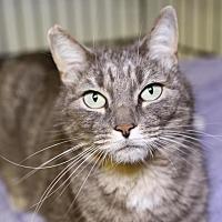 Adopt A Pet :: Sally - Winston-Salem, NC