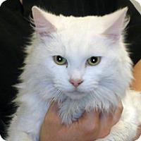 Adopt A Pet :: Snowflake - Wildomar, CA