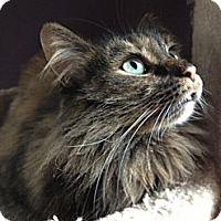 Adopt A Pet :: Trista - Byron Center, MI
