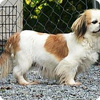 Adopt A Pet :: Fiona - Hop Bottom, PA