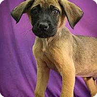 Adopt A Pet :: Jipper - Broomfield, CO