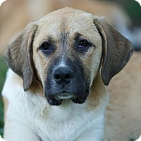 Adopt A Pet :: Brianna - Providence, RI