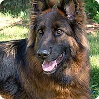 Adopt A Pet :: Cane - Wayland, MA