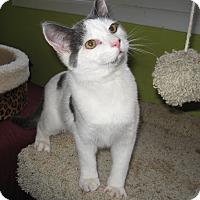 Adopt A Pet :: Jaime - Colmar, PA