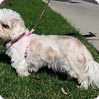 Adopt A Pet :: Crystal - Simi Valley, CA