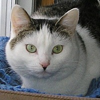 Heart Cat Rescue Bristol