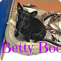 Adopt A Pet :: Betty Boo - Scottsdale, AZ