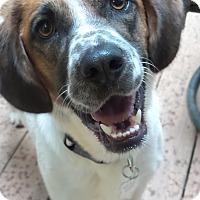 Adopt A Pet :: Molly - Lebanon, CT