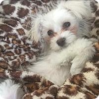 Adopt A Pet :: Kia - Long Beach, NY