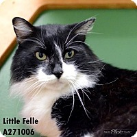 Adopt A Pet :: LITTLE FELLER - Conroe, TX