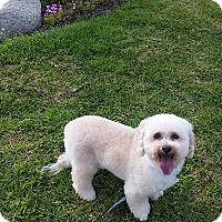 Adopt A Pet :: Rufus - Santa Ana, CA