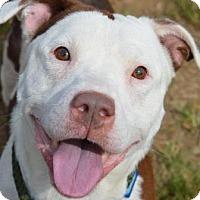 Adopt A Pet :: Twiggy - Philadelphia, PA