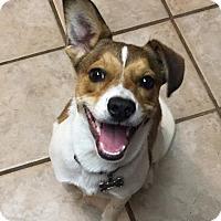 Adopt A Pet :: Rowdy - Staunton, VA