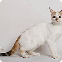 Adopt A Pet :: Snicklefritz - Riverside, CA