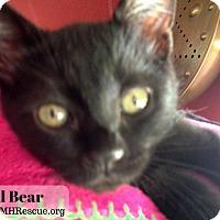 Adopt A Pet :: Lil Bear - Temecula, CA