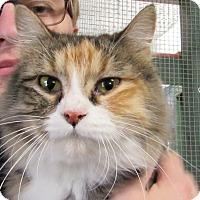 Adopt A Pet :: Jodi - Grinnell, IA