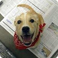Adopt A Pet :: BUCKY - Terre Haute, IN