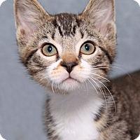 Adopt A Pet :: Heyward - Encinitas, CA