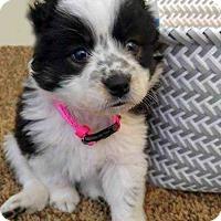 Adopt A Pet :: Pepper - Council Bluffs, IA
