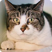 Adopt A Pet :: Gatorade - Brimfield, MA