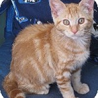 Adopt A Pet :: Seville - Pt. Richmond, CA