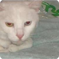 Adopt A Pet :: Fiona - Brea, CA