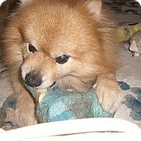 Adopt A Pet :: FLUFFY - Mahopac, NY