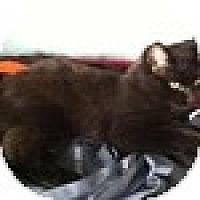 Adopt A Pet :: Emmett - Vancouver, BC