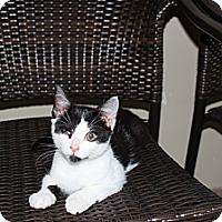 Adopt A Pet :: Ming Ming - Secaucus, NJ