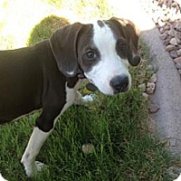 Adopt A Pet :: Dallas James - Phoenix, AZ