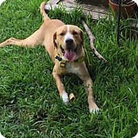 Adopt A Pet :: Emmett - Austin, TX
