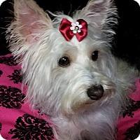 Adopt A Pet :: Whitney Montgomery - Urbana, OH