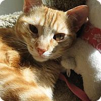 Adopt A Pet :: TWIGGY - Brea, CA