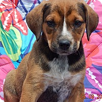 Adopt A Pet :: Raider (8 lb) - SUSSEX, NJ