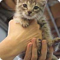 Adopt A Pet :: Eli - Sparta, NJ