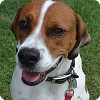 Adopt A Pet :: Cooper - Lebanon, TN