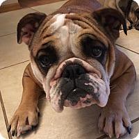 Adopt A Pet :: Bobbi Bee - Odessa, FL