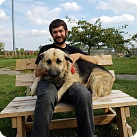 Adopt A Pet :: Wilber - Elyria, OH