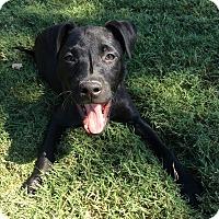 Adopt A Pet :: Chloe - Rochester, NH