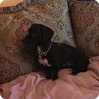 Adopt A Pet :: Ellie - Boerne, TX
