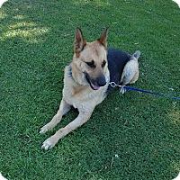 Adopt A Pet :: Thoren - San Diego, CA