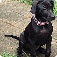 Adopt A Pet :: Hannah - Bedminster, NJ