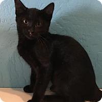 Adopt A Pet :: Smokey (Petco- Fountain Hills) - Scottsdale, AZ