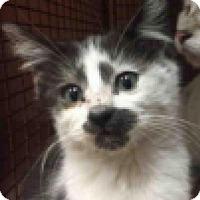 Adopt A Pet :: Bumble - Austin, TX