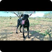 Adopt A Pet :: FARAH - Mesa, AZ