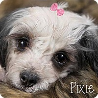 Adopt A Pet :: Pixie is Reserved - Kirkland, QC