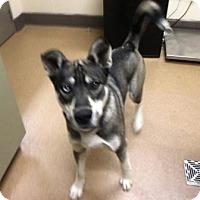 Adopt A Pet :: Beau - Beverly Hills, CA